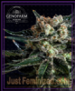 Genofarm Black Diesel Female 10 Cannabis Seeds